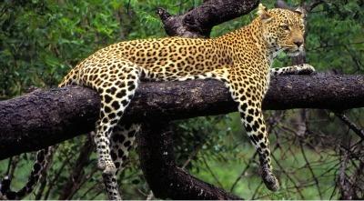DoaAntiques: Lion Safari Toursafari Holidaysafrican Safarikenya Safari