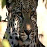 African animal pictures