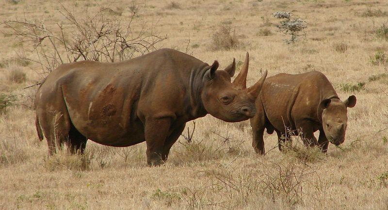 natural habitat of black rhino