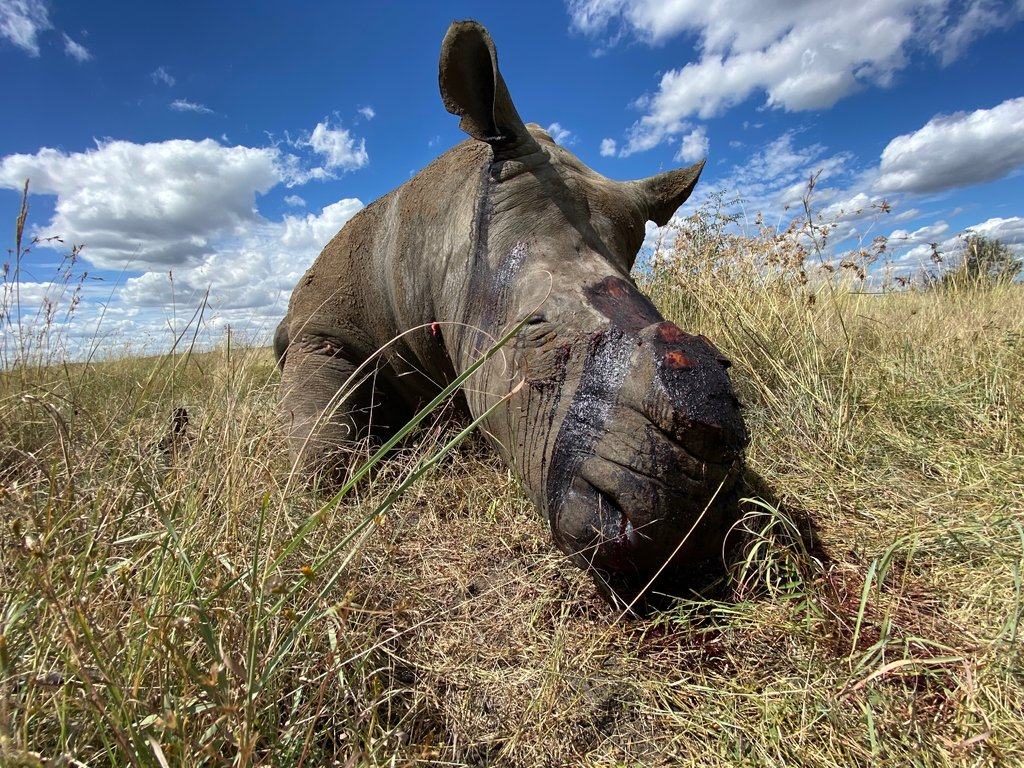 reasons for rhino poaching