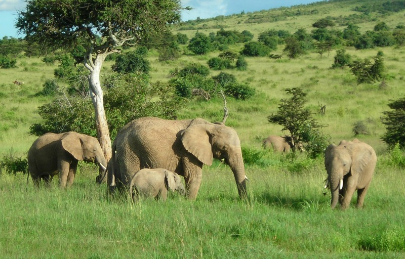 African elephant - some fascinating facts and pictures