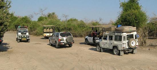 chobe national park safari