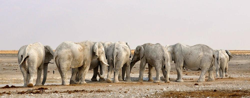 Etosha Namibia wildlife