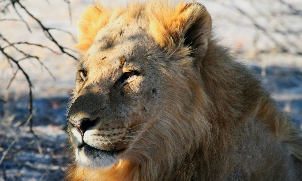 Namibia National Parks