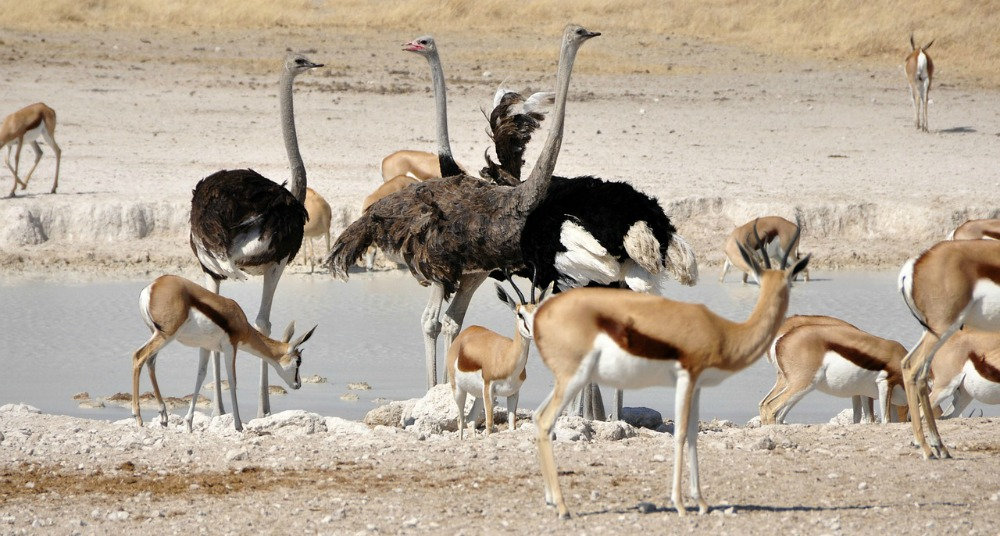 Etosha National Park review