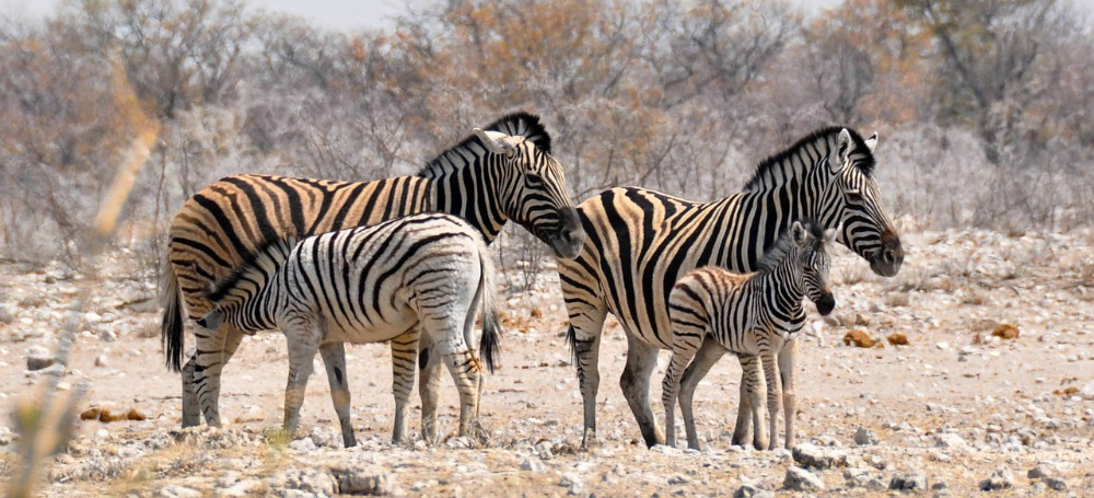 Game reserve Namibia