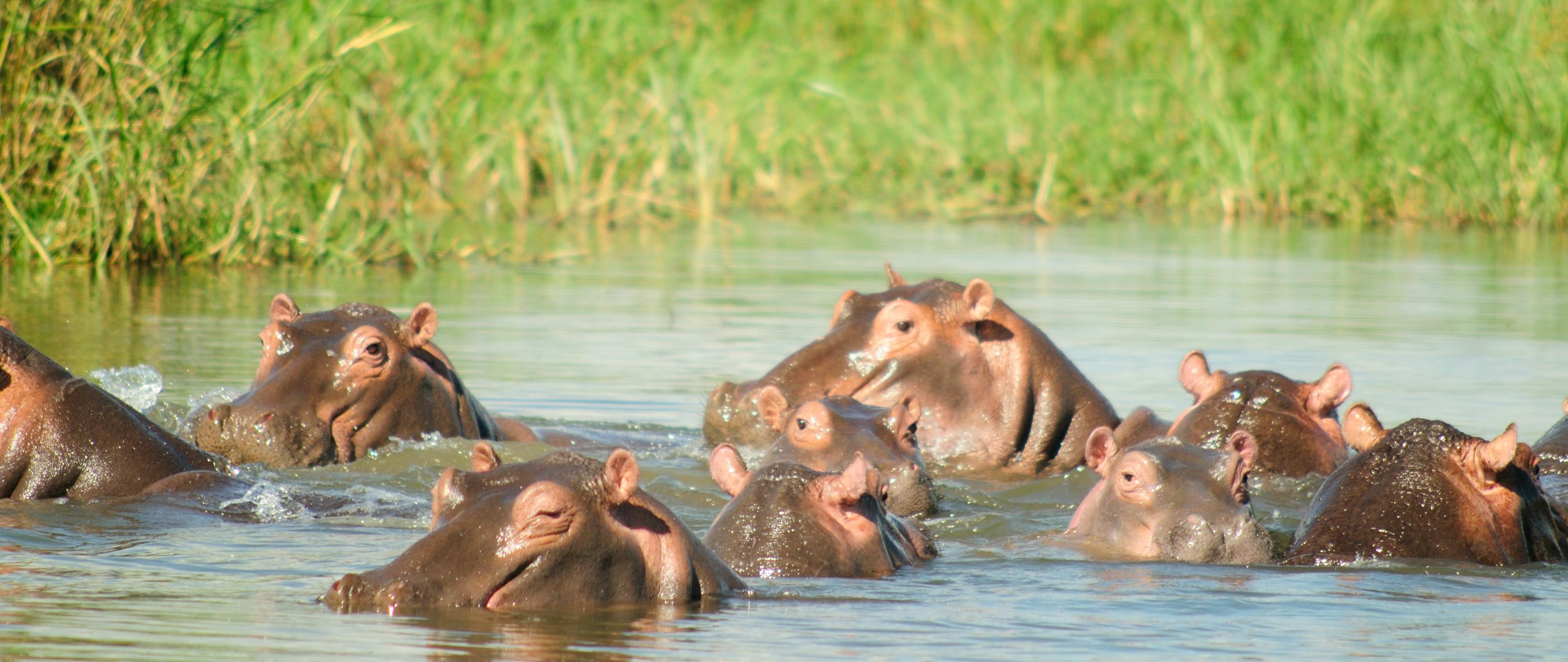 hippo environment