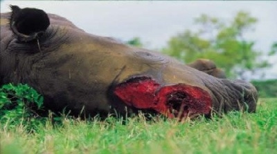 how to stop rhino poaching