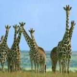 African animals blog