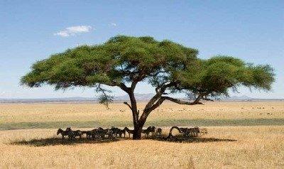 day on an African safari