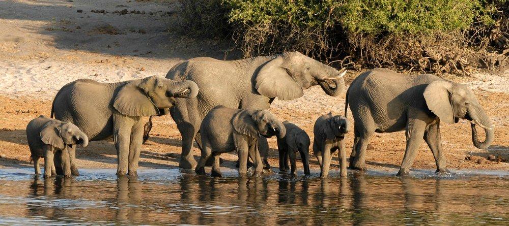 chobe national park travel