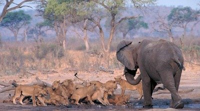 animals in chobe national park