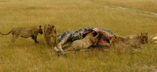 wildlife sigthings in chobe