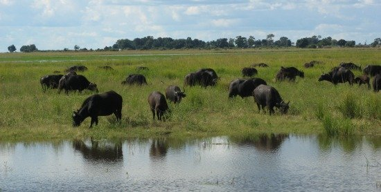 chobe national park pictures