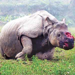 how to stop rhino poaching